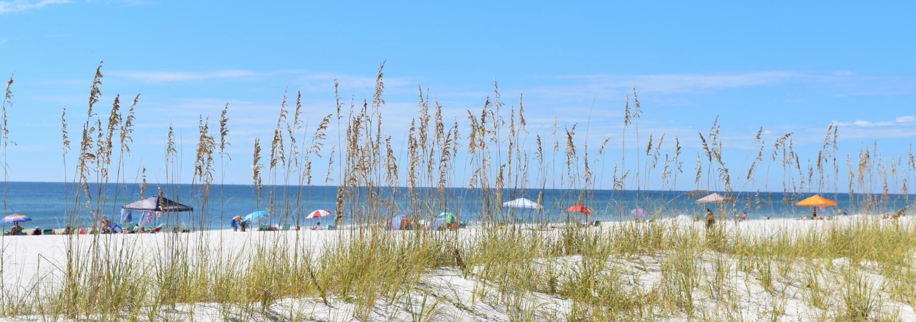 Beach and Sea Oats at Gulf Shores