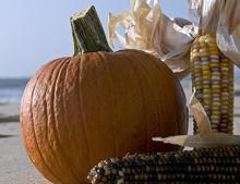 Fall on Gulf Shores | Foodie Events